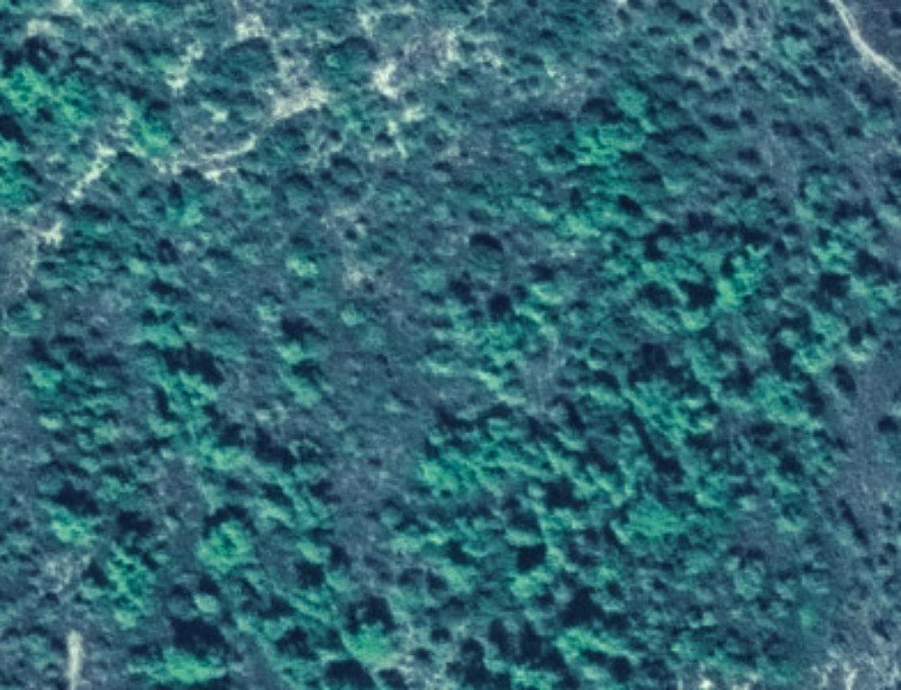 Χάρτες Δασικών Εκτάσεων